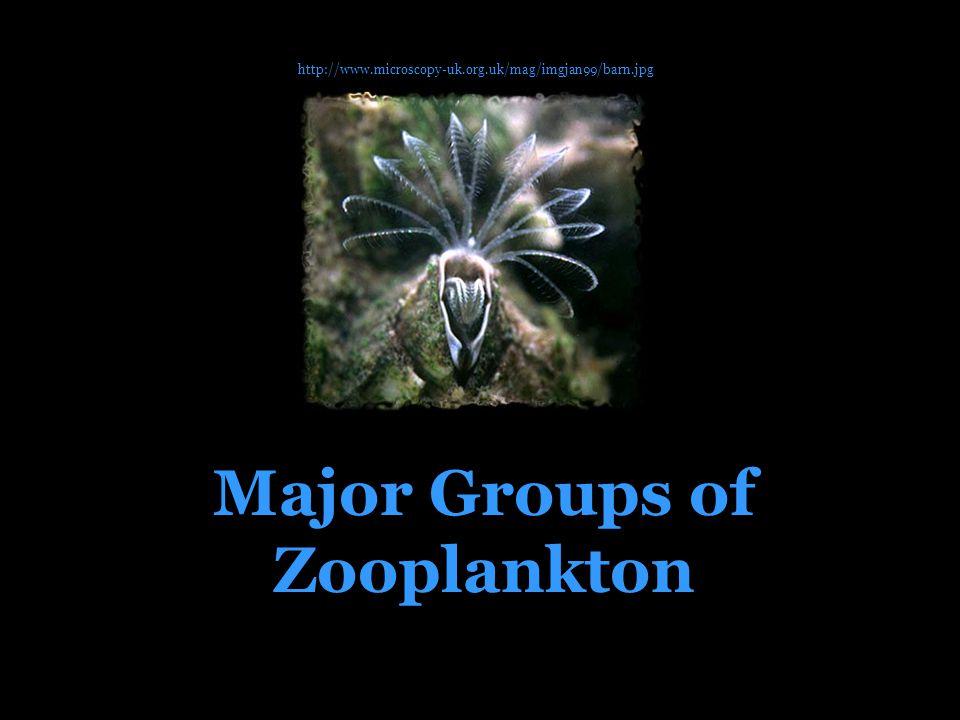 Major Groups of Zooplankton http://www.microscopy-uk.org.uk/mag/imgjan99/barn.jpg