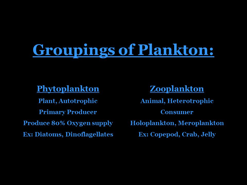 Groupings of Plankton: Zooplankton Animal, Heterotrophic Consumer Holoplankton, Meroplankton Ex: Copepod, Crab, Jelly Phytoplankton Plant, Autotrophic Primary Producer Produce 80% Oxygen supply Ex: Diatoms, Dinoflagellates