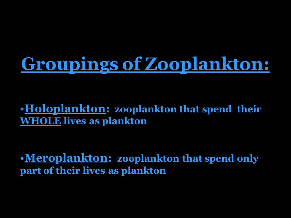 Groupings of Zooplankton: Holoplankton: zooplankton that spend their WHOLE lives as plankton Meroplankton: zooplankton that spend only part of their lives as plankton