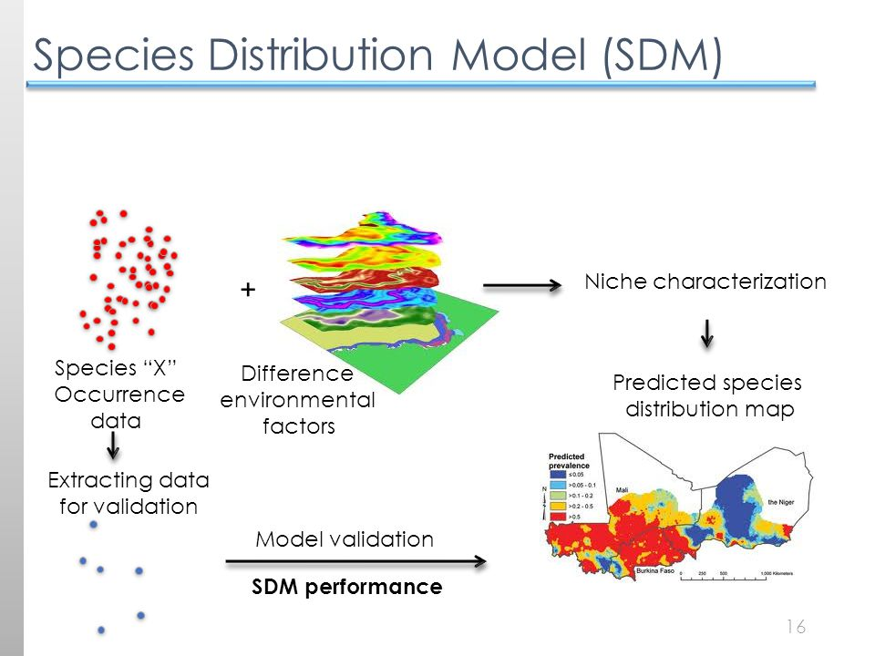 16 Species Distribution Model (SDM) Species X Occurrence data Difference environmental factors + Niche characterization Extracting data for validation Model validation SDM performance Predicted species distribution map