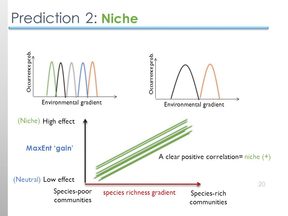 20 Prediction 2: Niche species richness gradient Species-poor communities Species-rich communities High effect Low effect MaxEnt 'gain' (Neutral) (Niche) A clear positive correlation= niche (+) Environmental gradient Occurrence prob.