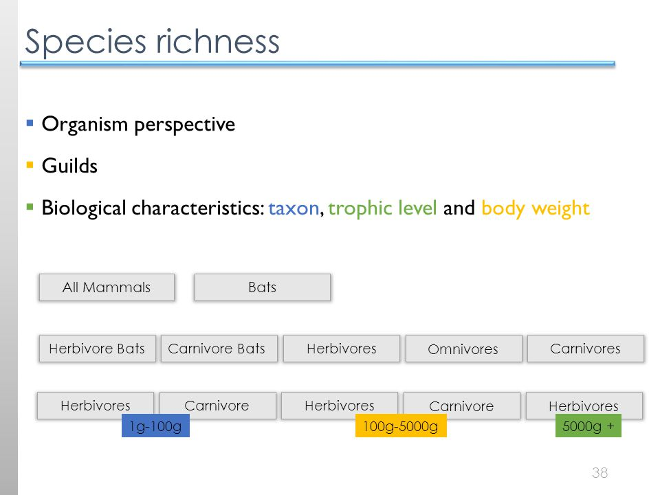 38 Species richness  Organism perspective  Guilds  Biological characteristics: taxon, trophic level and body weight All Mammals Bats Herbivore Bats Carnivore BatsHerbivores Omnivores Carnivores Herbivores CarnivoreHerbivores Carnivore Herbivores 1g-100g 100g-5000g5000g +