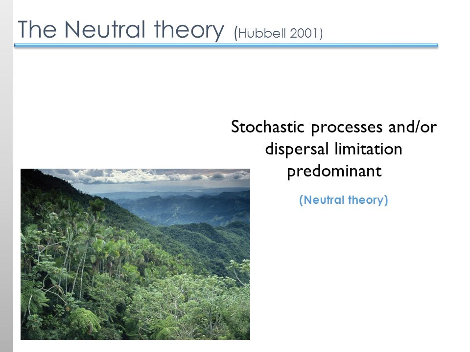 The Neutral theory ( Hubbell 2001) (Neutral theory) Stochastic processes and/or dispersal limitation predominant