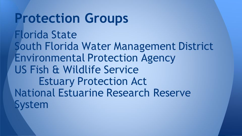Protection Groups Florida State South Florida Water Management District Environmental Protection Agency US Fish & Wildlife Service Estuary Protection Act National Estuarine Research Reserve System