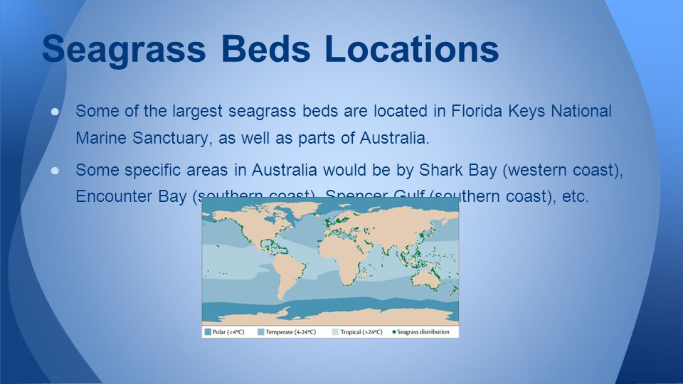 Seagrass Beds Locations ●Some of the largest seagrass beds are located in Florida Keys National Marine Sanctuary, as well as parts of Australia.