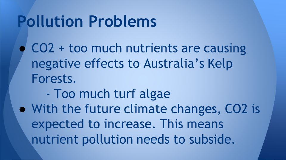 Pollution Problems ● CO2 + too much nutrients are causing negative effects to Australia's Kelp Forests.