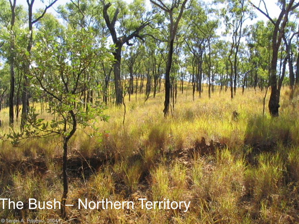 The Bush – Northern Territory