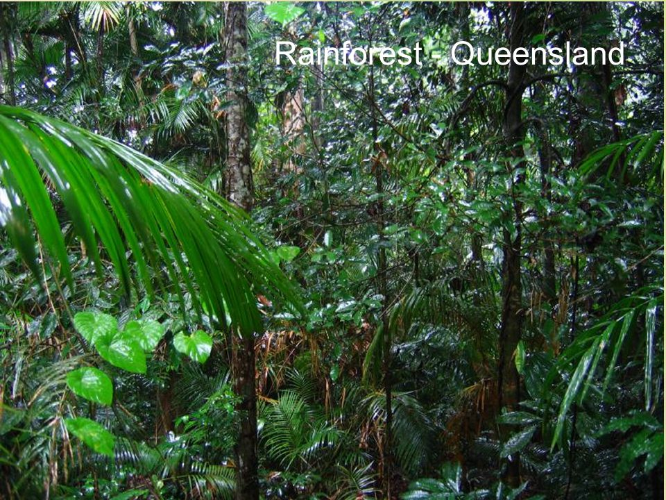 Rainforest - Queensland