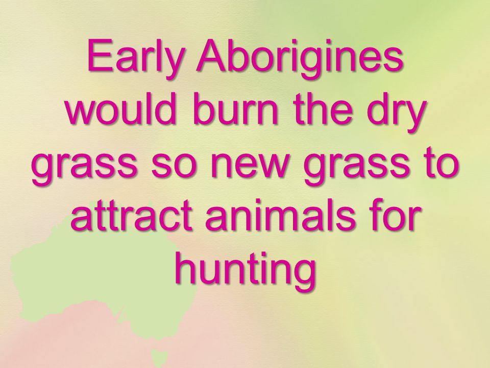 Early Aborigines would burn the dry grass so new grass to attract animals for hunting