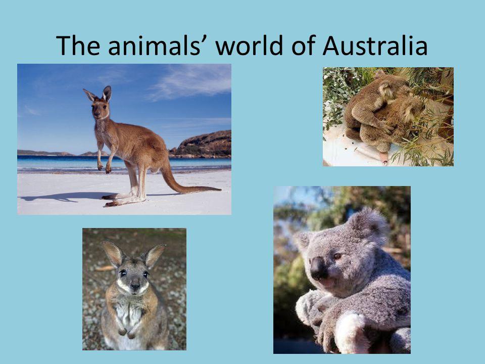 The animals' world of Australia