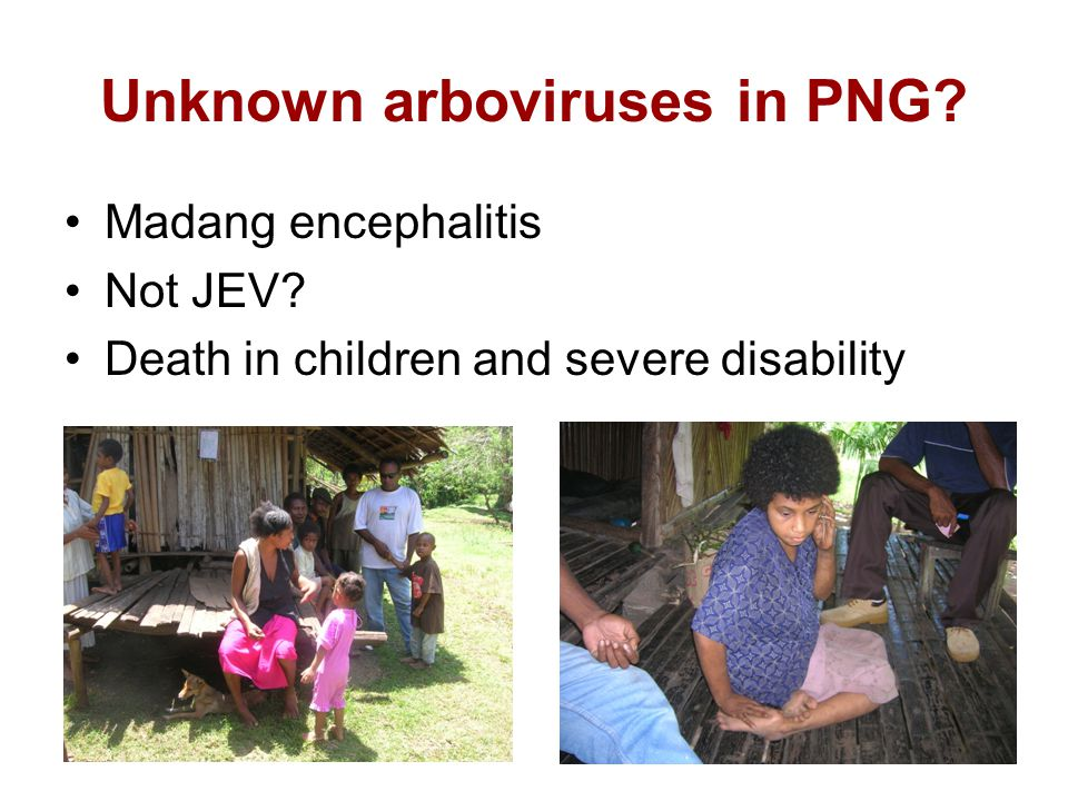 Unknown arboviruses in PNG Madang encephalitis Not JEV Death in children and severe disability