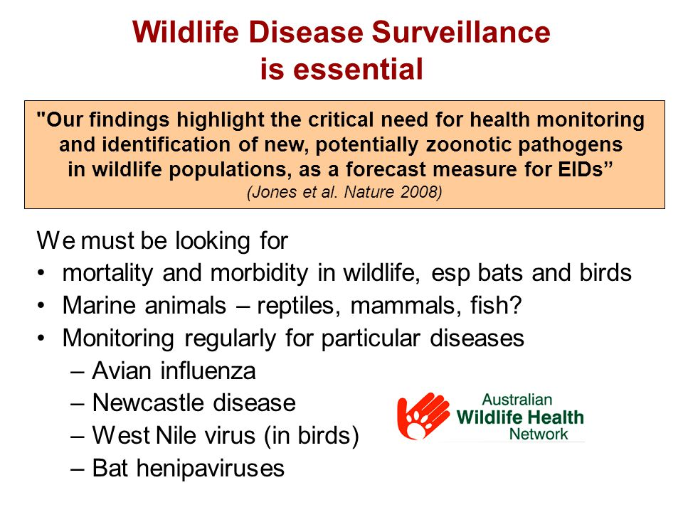 Wildlife Disease Surveillance is essential We must be looking for mortality and morbidity in wildlife, esp bats and birds Marine animals – reptiles, mammals, fish.