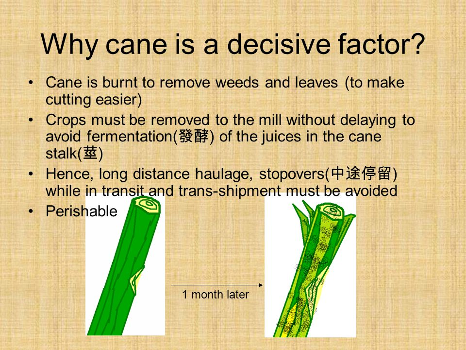 Why cane is a decisive factor.