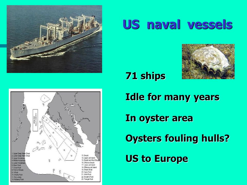 US naval vessels 71 ships Idle for many years In oyster area Oysters fouling hulls? US to Europe