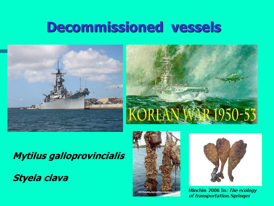 Decommissioned vessels Mytilus galloprovincialis Styela clava Minchin 2006 In: The ecology of transportation. Springer