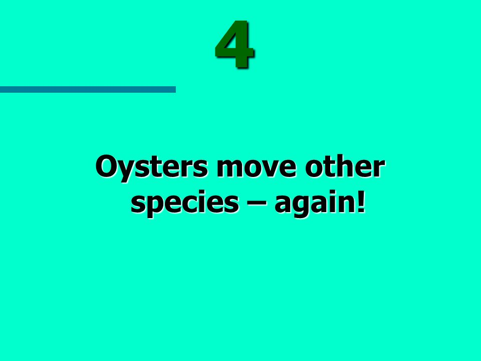 4 Oysters move other species – again!
