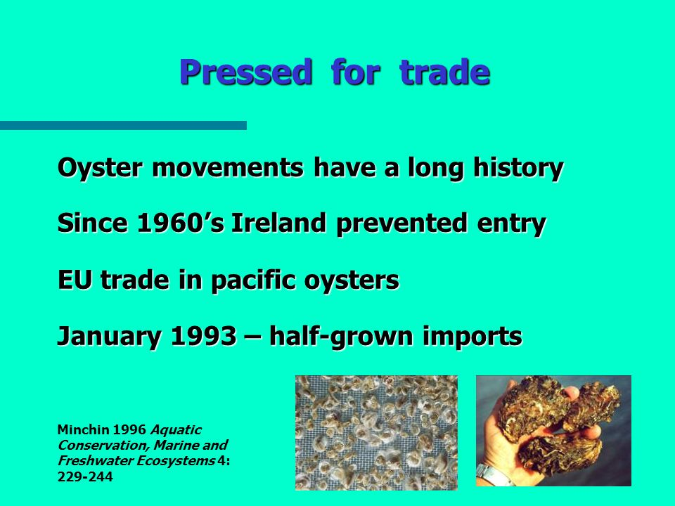 Pressed for trade Oyster movements have a long history Since 1960's Ireland prevented entry EU trade in pacific oysters January 1993 – half-grown imports Minchin 1996 Aquatic Conservation, Marine and Freshwater Ecosystems 4: 229-244