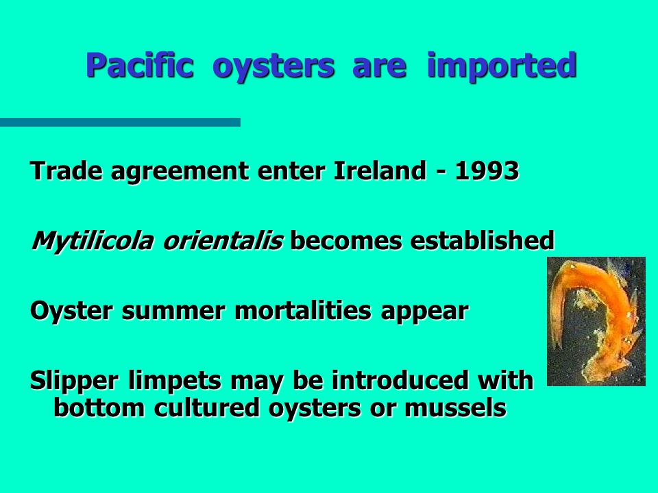 Pacific oysters are imported Trade agreement enter Ireland - 1993 Mytilicola orientalis becomes established Oyster summer mortalities appear Slipper limpets may be introduced with bottom cultured oysters or mussels