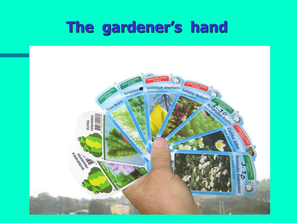 The gardener's hand