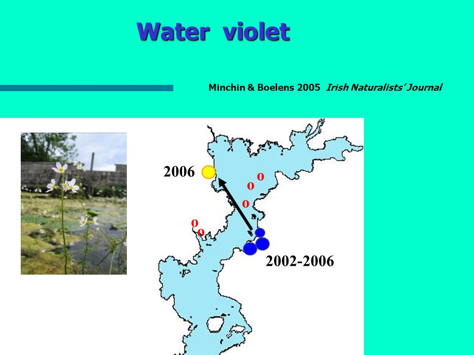 Water violet 2005-06 2006 Figure 11: Abundance of Water Violet, Hottnia palustris, 2005 - 2006 Moderate Dense 2006 <2002-2006 o o o o o o Minchin & Boelens 2005 Irish Naturalists' Journal