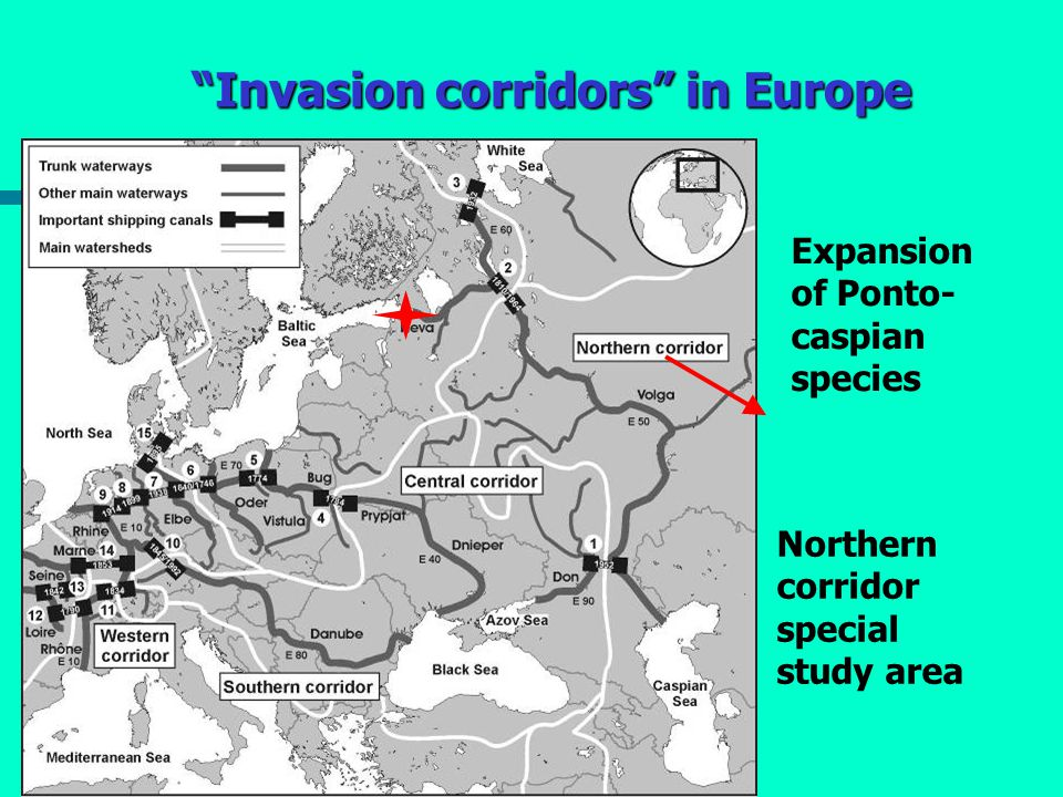 Invasion corridors in Europe Expansion of Ponto- caspian species Northern corridor special study area