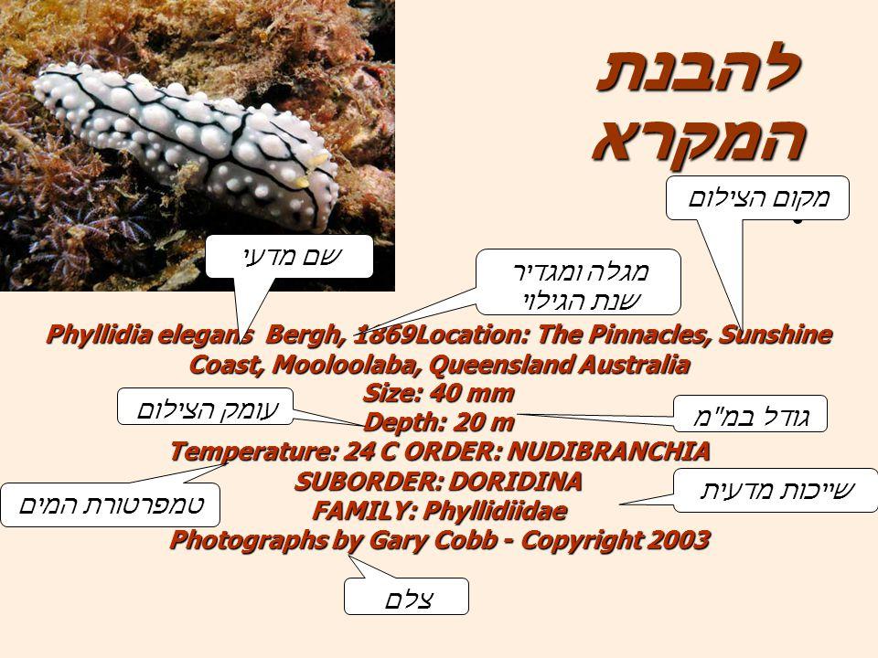 Phyllidia elegans Bergh, 1869Location: The Pinnacles, Sunshine Coast, Mooloolaba, Queensland Australia Size: 40 mm Depth: 20 m Temperature: 24 C ORDER: NUDIBRANCHIA SUBORDER: DORIDINA FAMILY: Phyllidiidae Photographs by Gary Cobb - Copyright 2003 להבנת המקרא שם מדעי מגלה ומגדיר שנת הגילוי מקום הצילום גודל במ מ עומק הצילום שייכות מדעית טמפרטורת המים צלם
