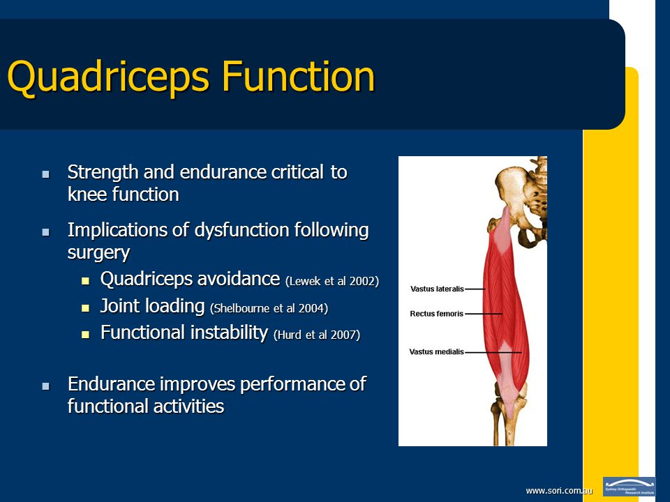 www.sori.com.au Quadriceps Function Strength and endurance critical to knee function Strength and endurance critical to knee function Implications of dysfunction following surgery Implications of dysfunction following surgery Quadriceps avoidance (Lewek et al 2002) Quadriceps avoidance (Lewek et al 2002) Joint loading (Shelbourne et al 2004) Joint loading (Shelbourne et al 2004) Functional instability (Hurd et al 2007) Functional instability (Hurd et al 2007) Endurance improves performance of functional activities Endurance improves performance of functional activities
