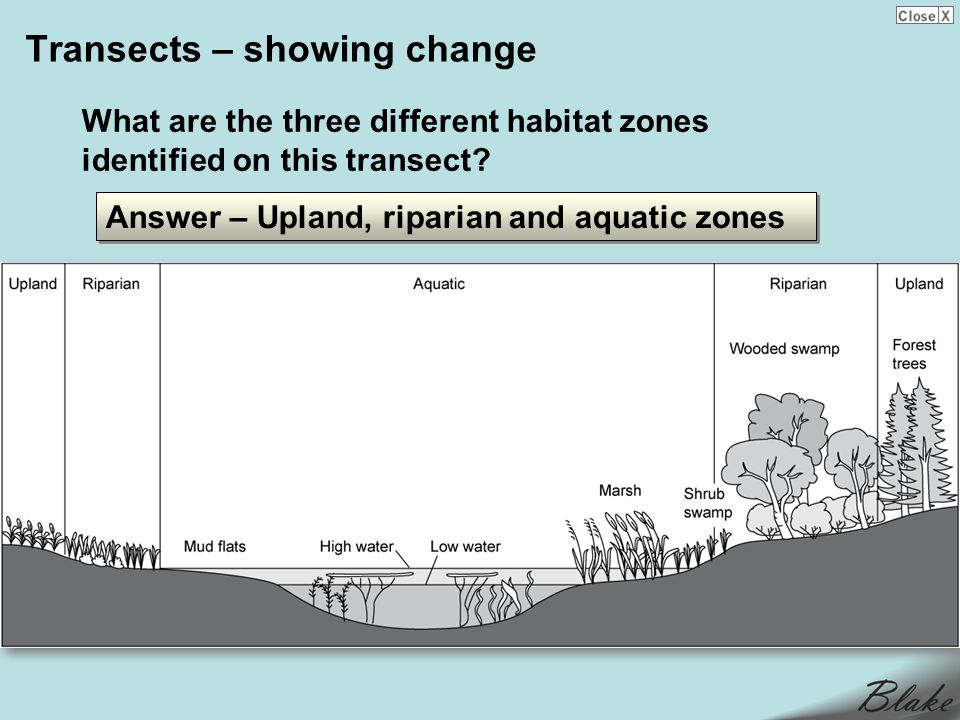 Transects – showing change What are the three different habitat zones identified on this transect.