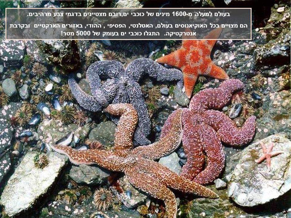 בעולם למעלה מ-1600 מינים של כוכבי ים,רובם מצטיינים בדגמי צבע מרהיבים.