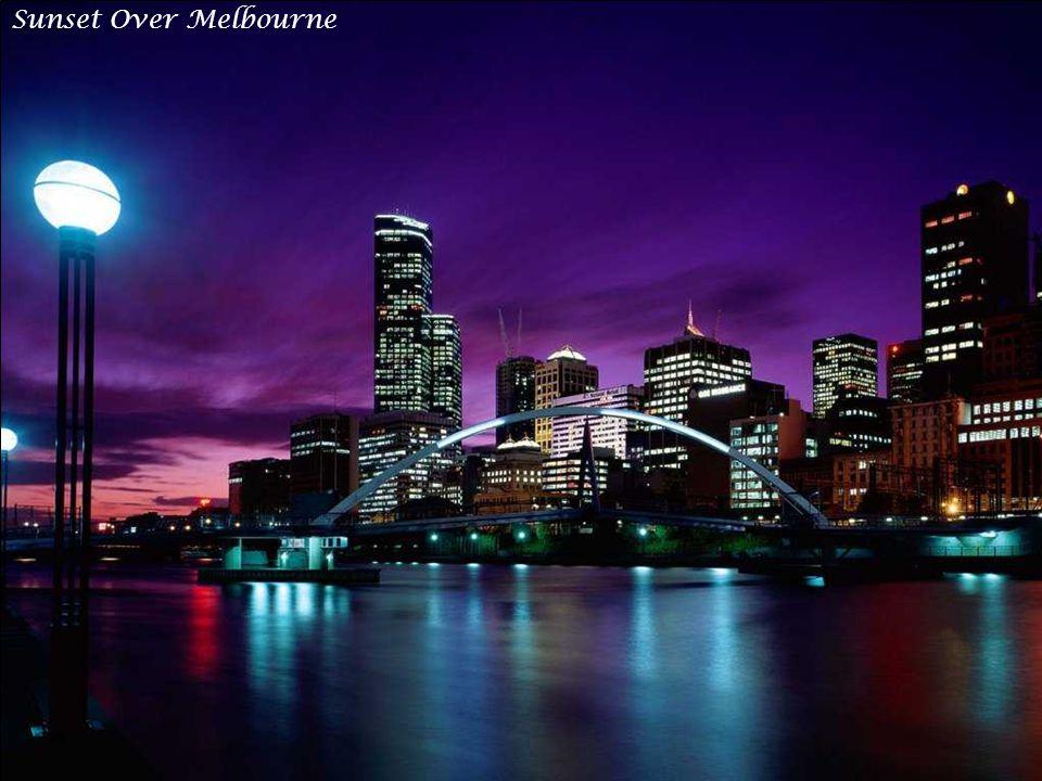 Sun-Kissed Sydney