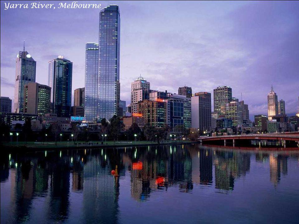 The Lights of Sydney