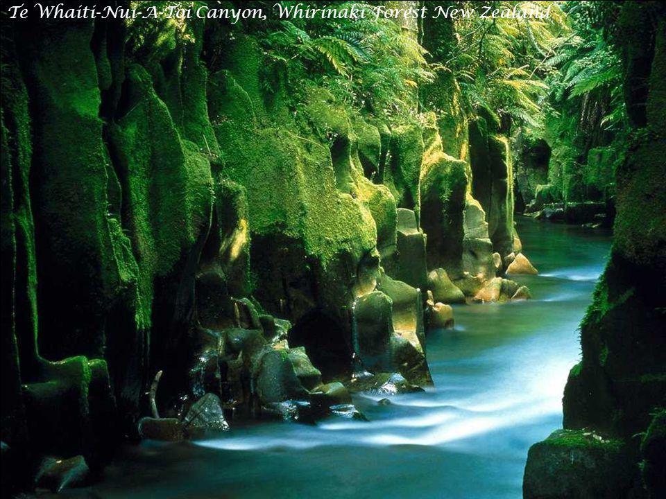Spring Meadow, Mount Cook, New Zealand