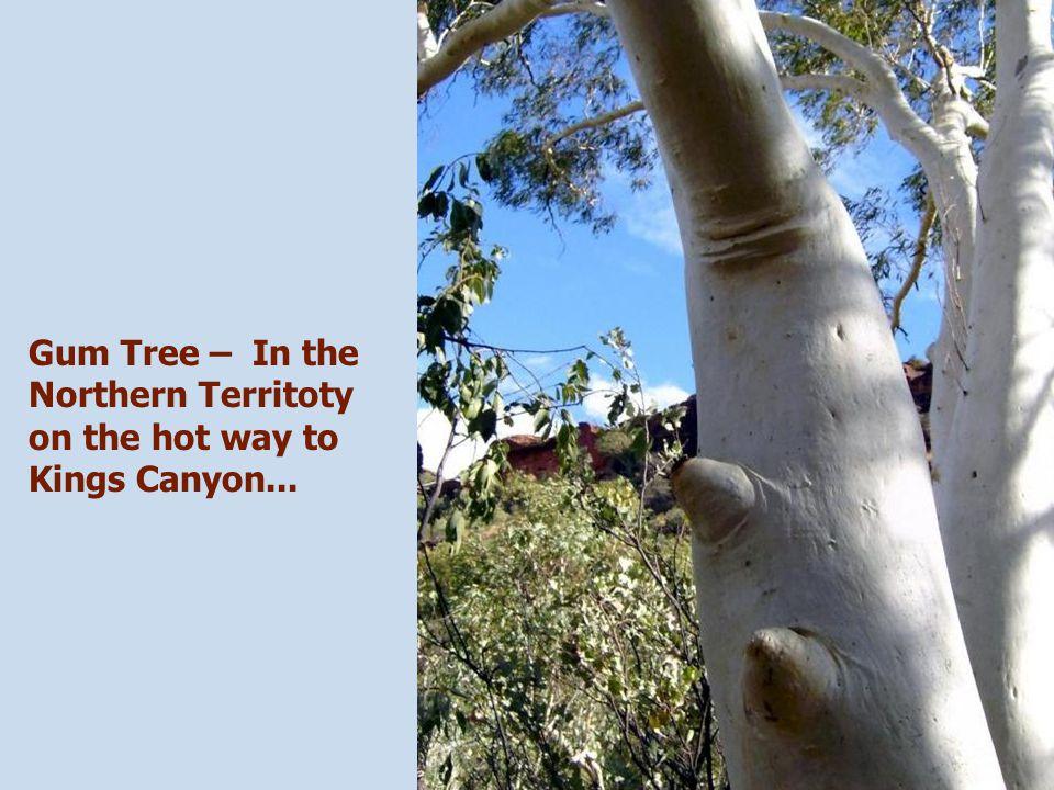 Amazing Kings Canyon – Northern Territoty.....