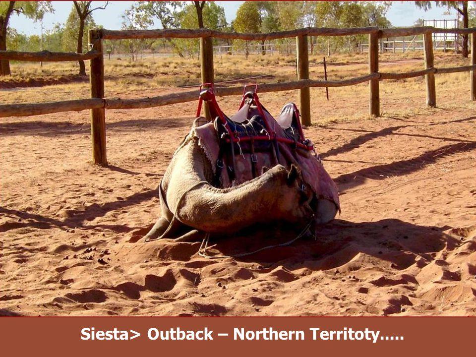 Close to Kata Tjuta – Northern Territoty.....
