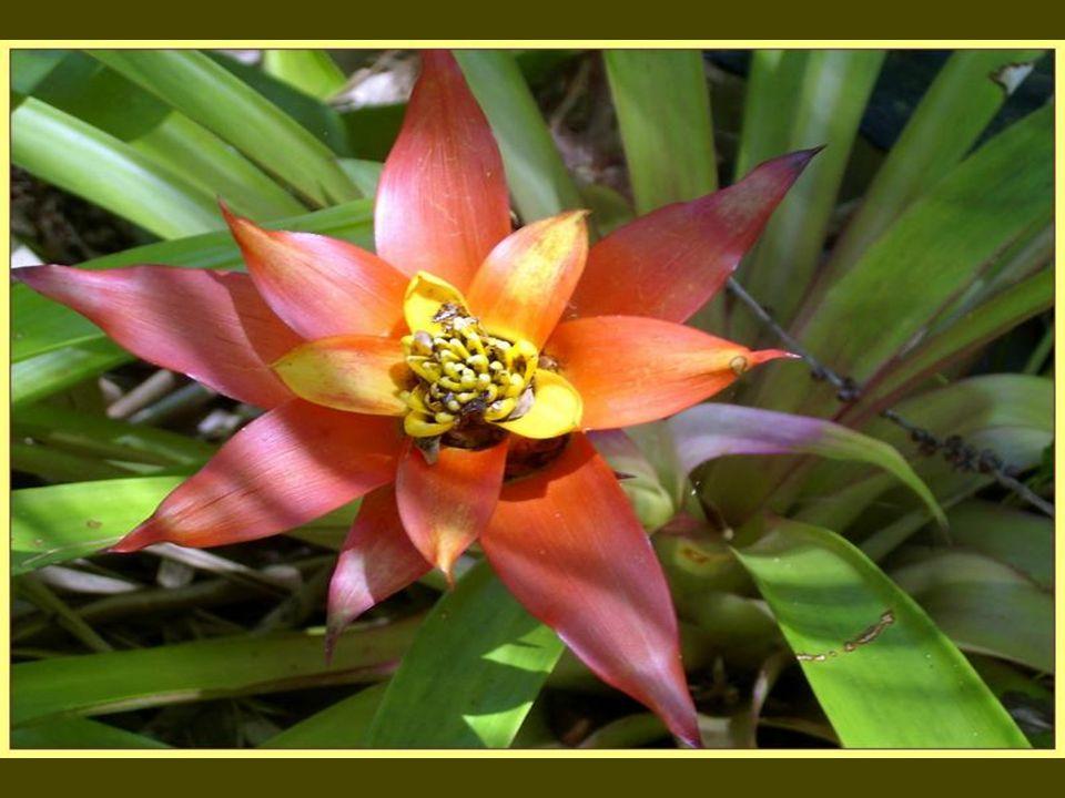 In Cairns - QL.....