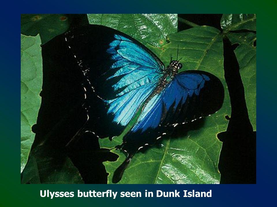 Dunk Island - Queensland, Great Barrier Reef