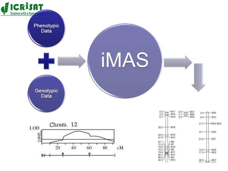 Phenotypic Data Genotypic Data iMAS