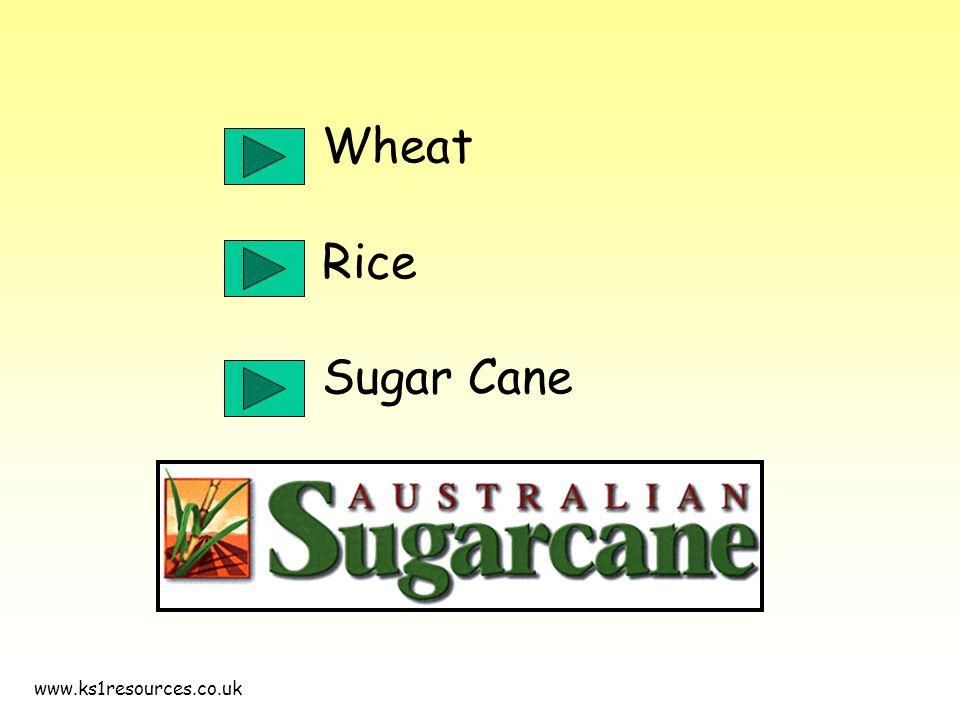 www.ks1resources.co.uk Wheat Rice Sugar Cane