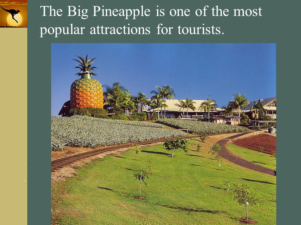 www.themegallery.com Company Logo The Big Pineapple is one of the most popular attractions for tourists.
