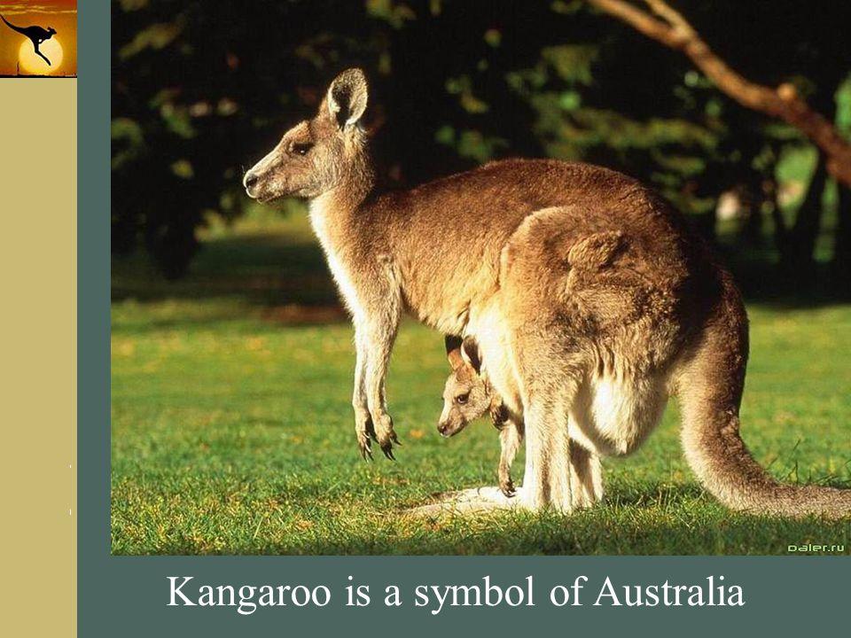 www.themegallery.com Company Logo Kangaroo is a symbol of Australia