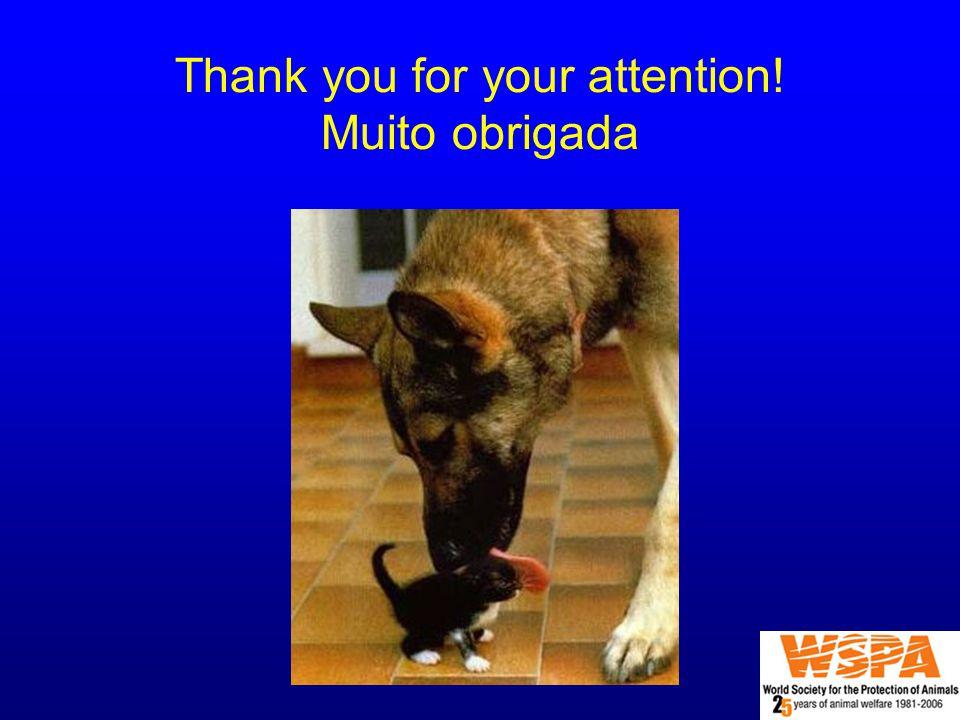 Thank you for your attention! Muito obrigada