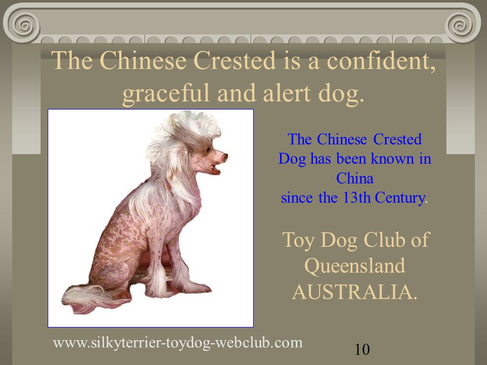 The Chihuahua is the world s smallest dog www.silkyterrier-toydog-webclub.com If you want more information, make contact with the breeder.
