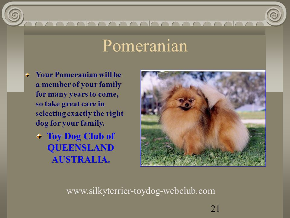 Pekingese Pekingese love all types of People of all ages and can be an ideal dog for anyone and will give true companionship and be very loyal to their owners.