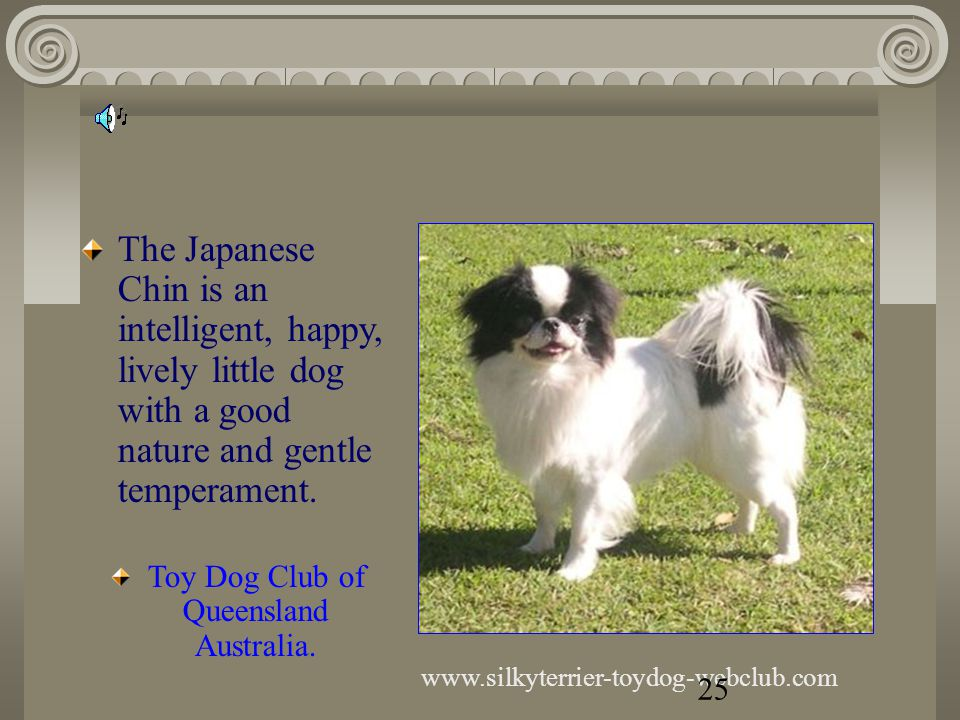 Yorkshire Terrier Toy Dog Club of Queensland AUSTRALIA The Yorkie is the ideal pet for the elderly person, as long as he is provided with the stimulus of your company.