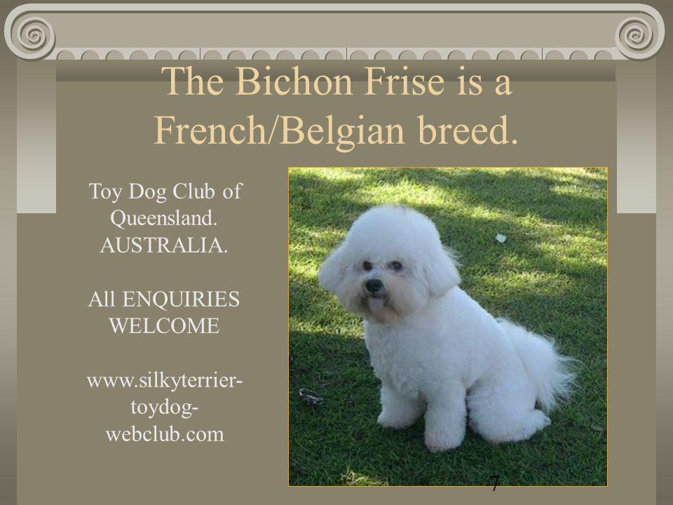 AFFENPINSCHER www.silkyterrier-toydog-webclub.com 6