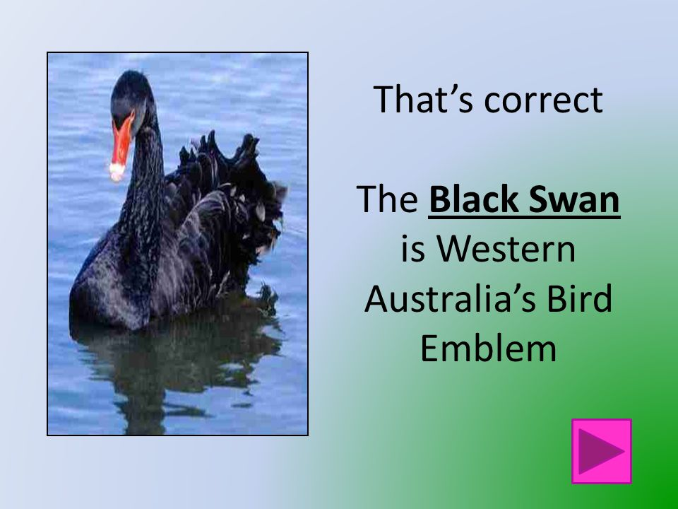That is not Western Australia's Bird Emblem Click on the button to go back and try again