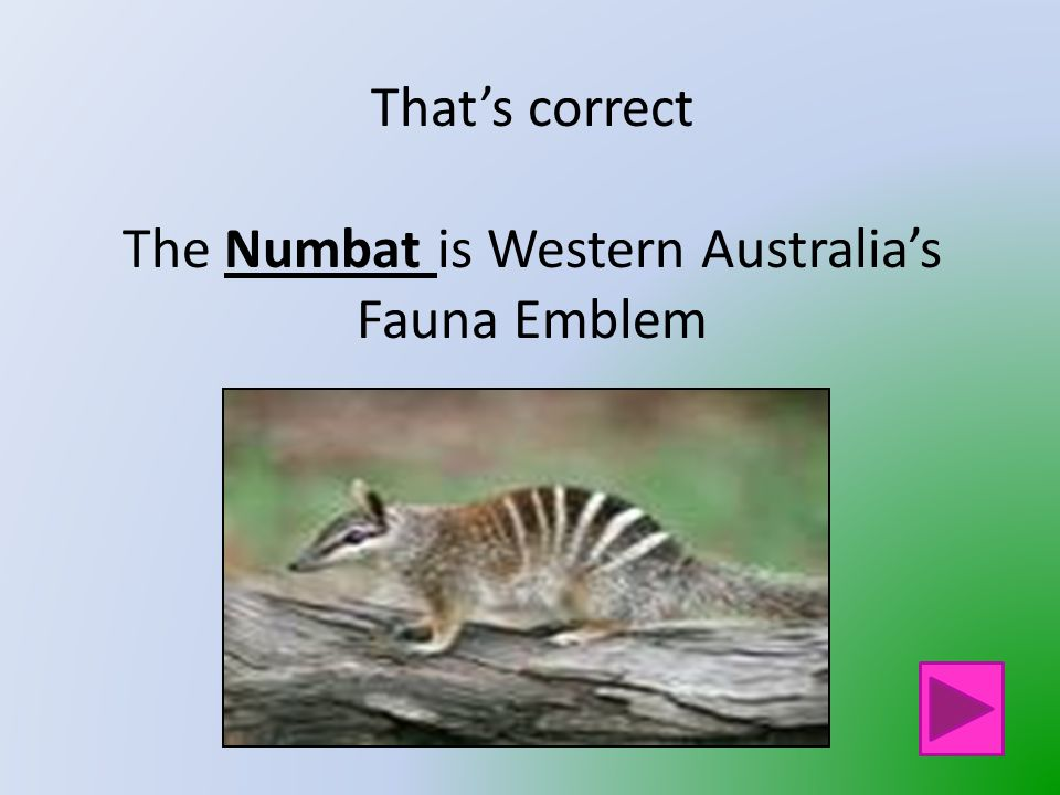 That is not Western Australia's Fauna Emblem Click on the button to go back and try again