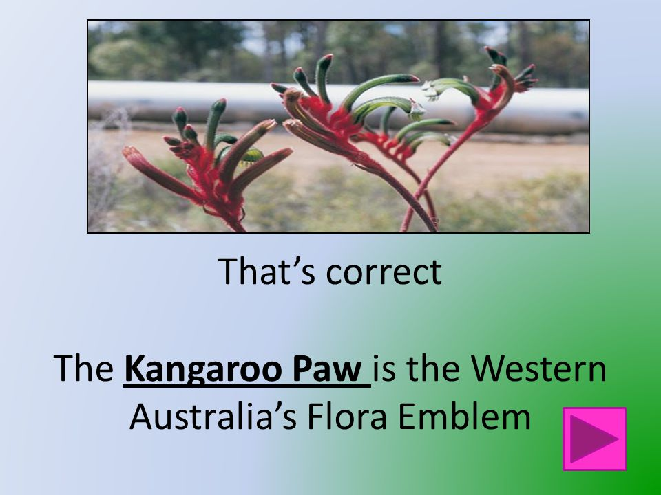 That is not Western Australia's Flora Emblem Click on the button to go back and try again