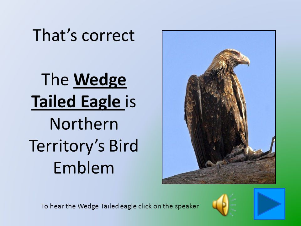That is not the Northern Territory's Bird Emblem Click on the button to go back and try again