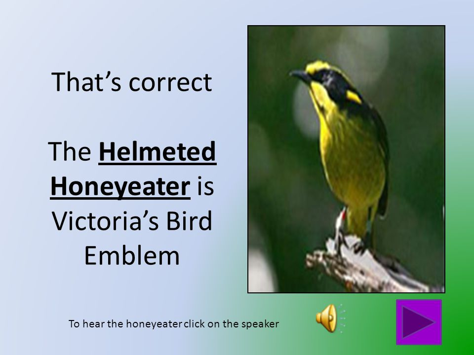 That is not Victoria's Bird Emblem Click on the button to go back and try again